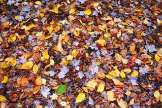 Autumn Glory 2014 006